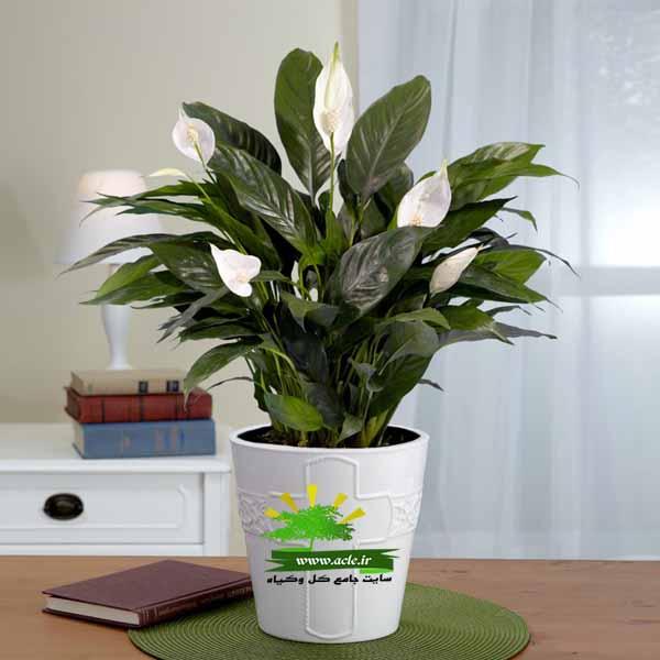 Four Ways To Better Interior Design Installations: بادوام ترین گیاه آپارتمانی را بشناسید و از آن در آپارتمان